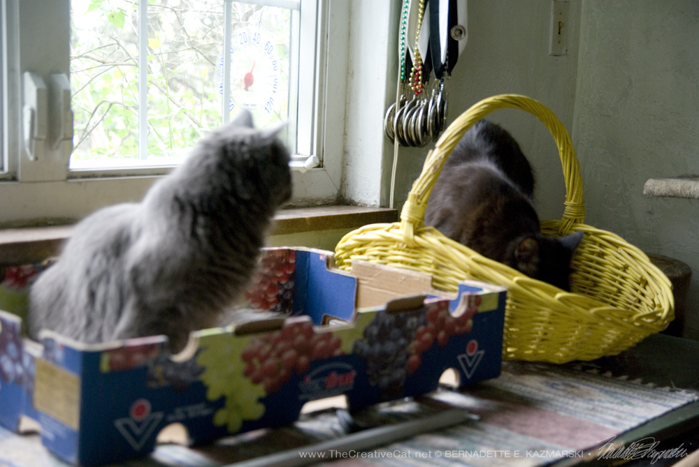 Hamlet and Ophelia discover the box and the basket.