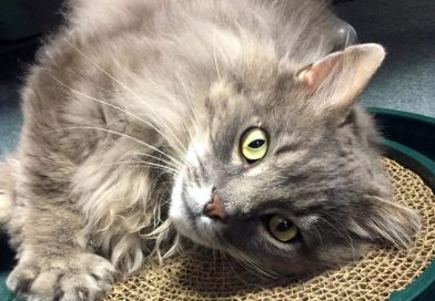 Cats for Adoption: Sid, Who Doesn't Want to Be a Colony Cat