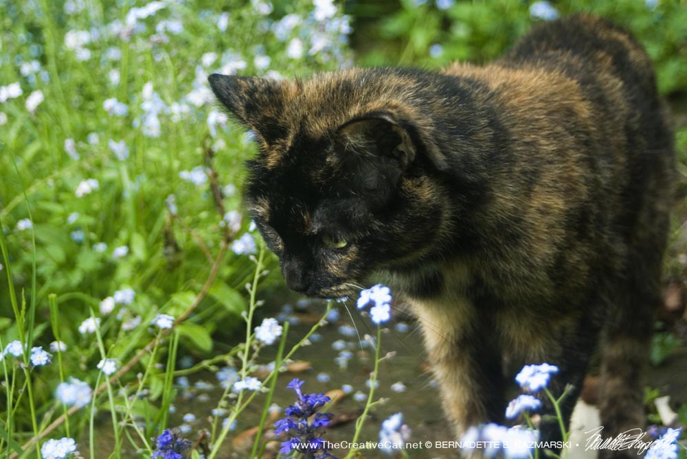 Kelly investigates the flowers.