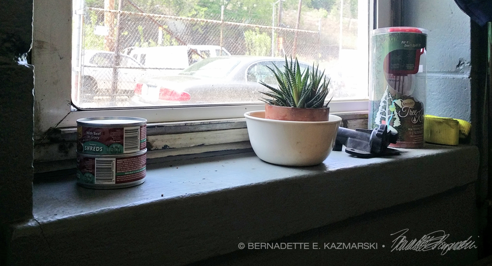 Necessities for a junkyard/auto recycling operation: cat food, aloe plant, car parts.
