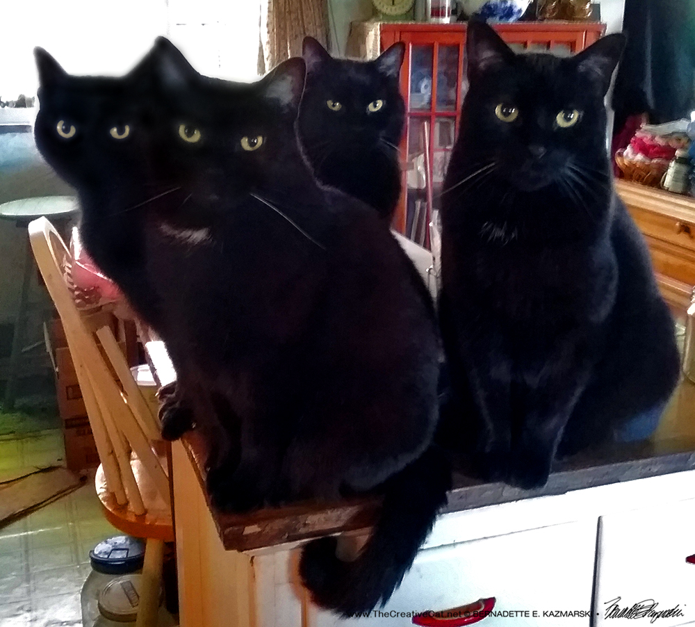 The Four Housecats of the Apocalypse await Second Breakfast