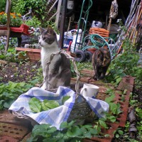 The garden stewards, Namir and Cookie, and the controlled chaos of my garden in spring.