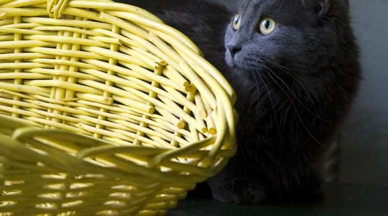 I wish she'd get in the basket because it matches her eyes.