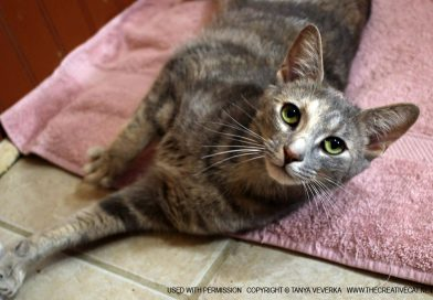 Cats for Adoption: Natasha, Who Will Be An Indoor Kitty, Please
