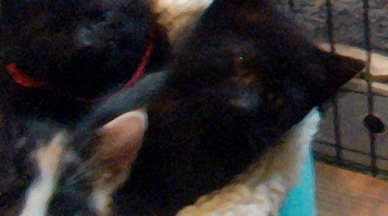 From the Archives: The Arrival of a Special Litter of Kittens, and Sophie Guards the Order