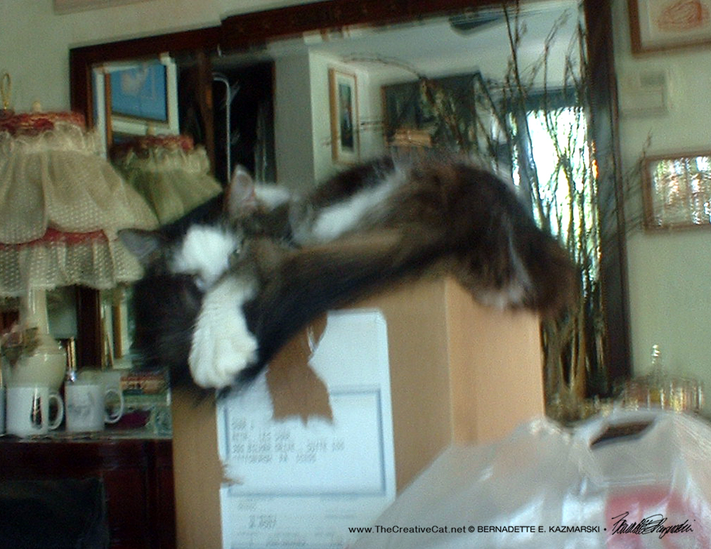 """Sophie watches me and gives me """"the paw""""."""