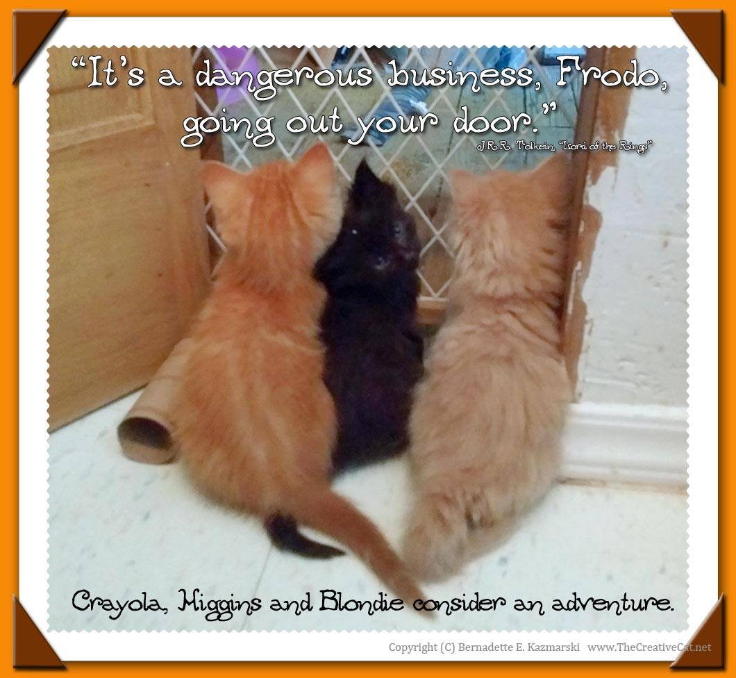 """It's a dangerous business, Frodo, going out your door."" The three fuzzy brothers, Crayola, Higgins and Blondie, consider an adventure."