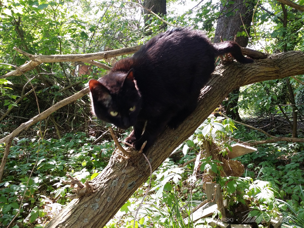 black cat in tree