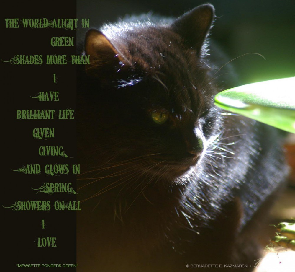 """Mewsette Ponders Green"", poem and photo © Bernadette E. Kazmarski"