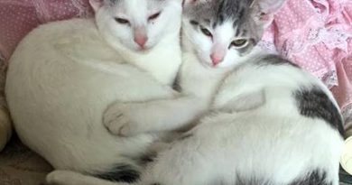Cats for Adoption: Minnie and Delaney