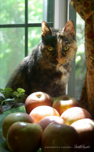 tortoiseshell cat with apples