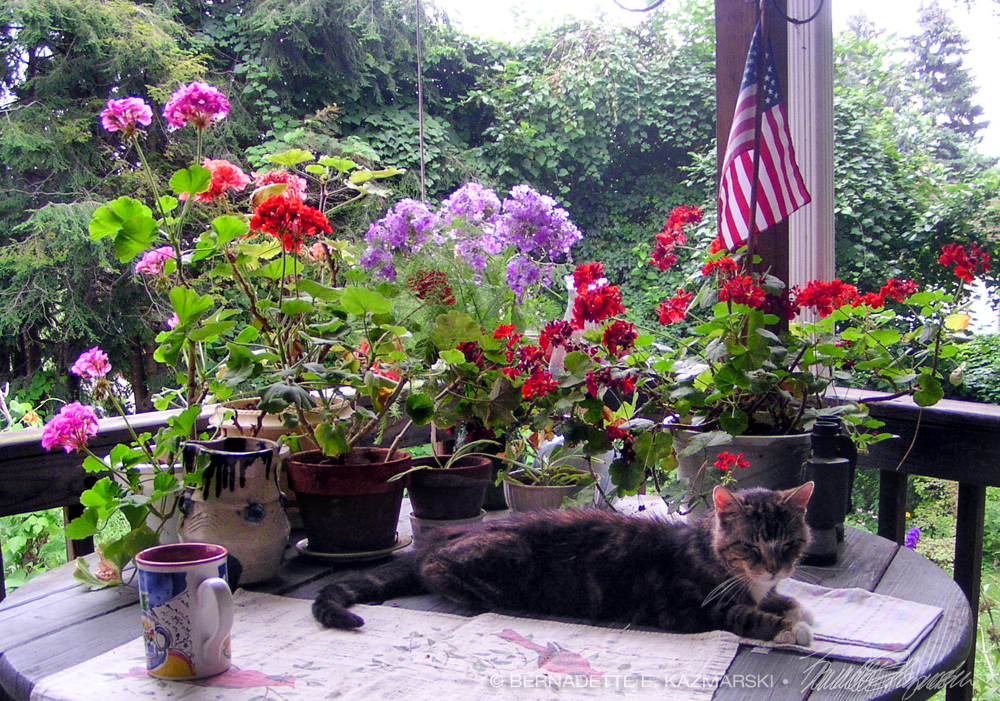 cat and flowers and flag