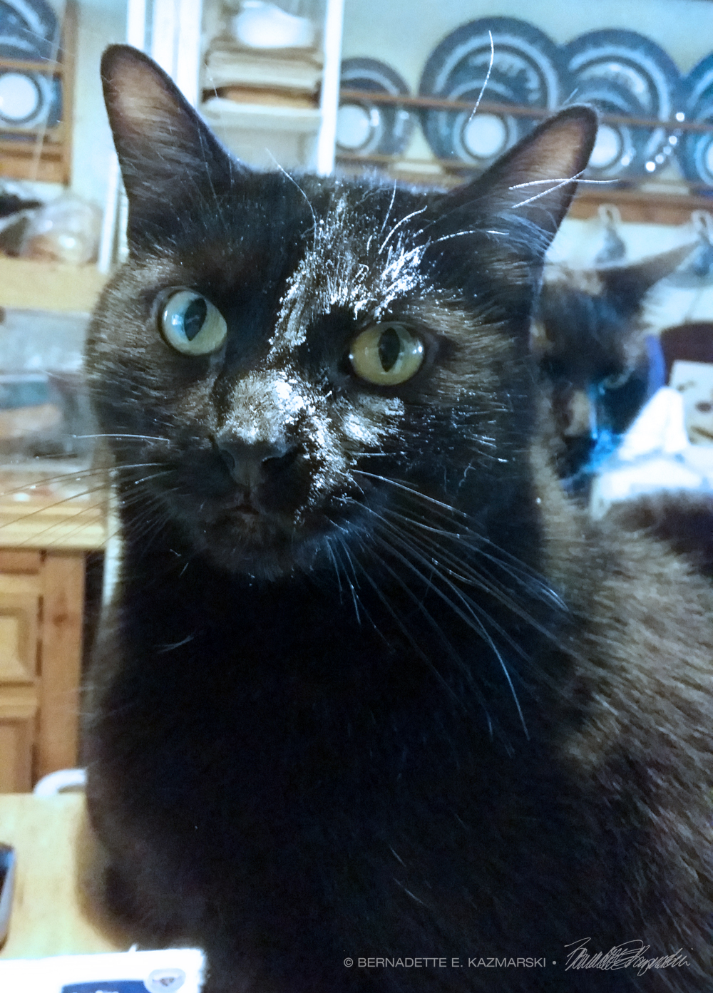 black cat with flour on face