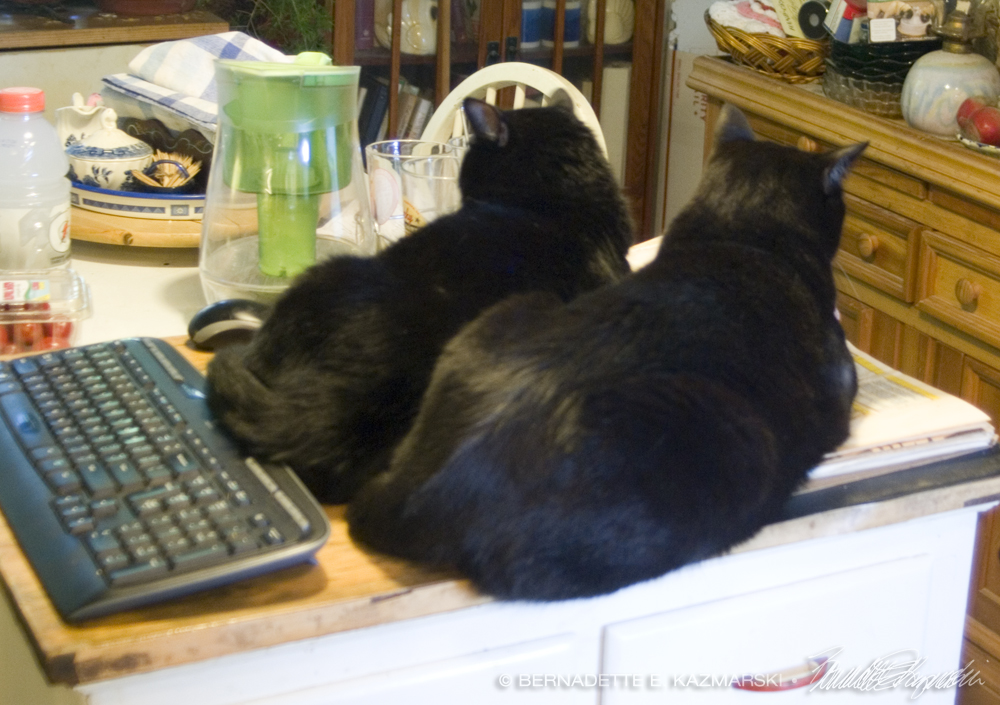 Two black cats on cookbook.