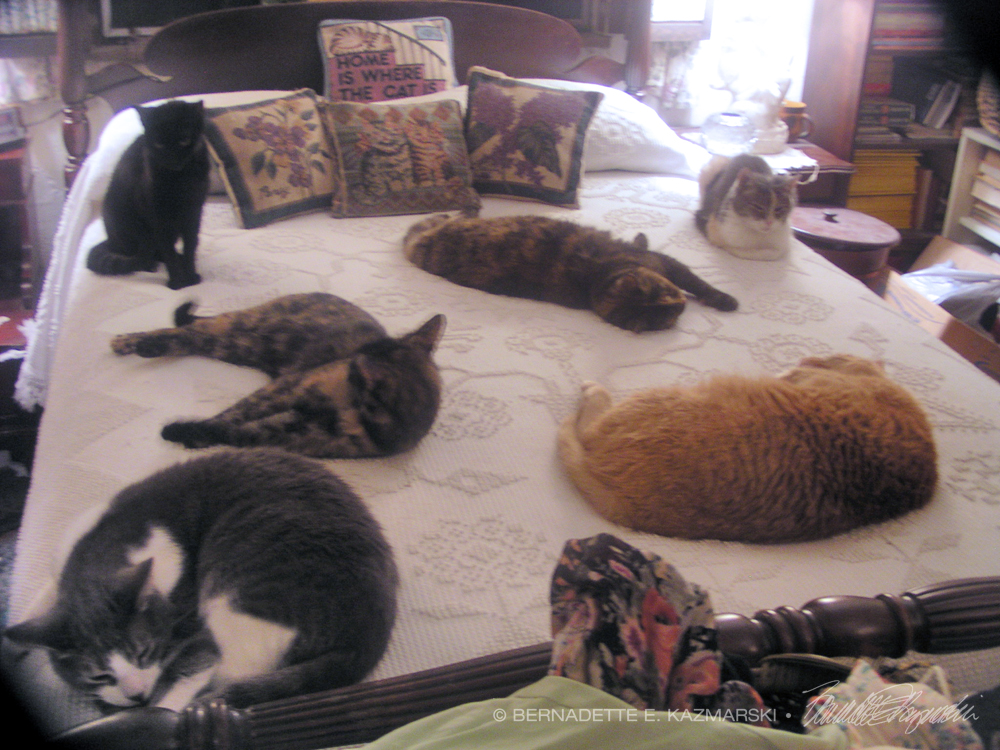 six cats on bed