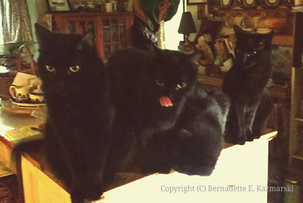 Four black cats impatiently waiting for breakfast.
