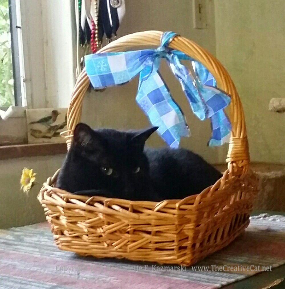 Giuseppe in the basket.
