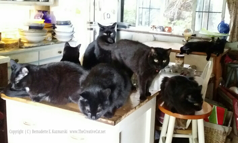 Happy Sunday from the Seven Samurai Housepanthers! We've been supervising our person as she cleans our fountain. This is very important work and must be done to our specifications.