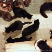 Eight cats at dinner.