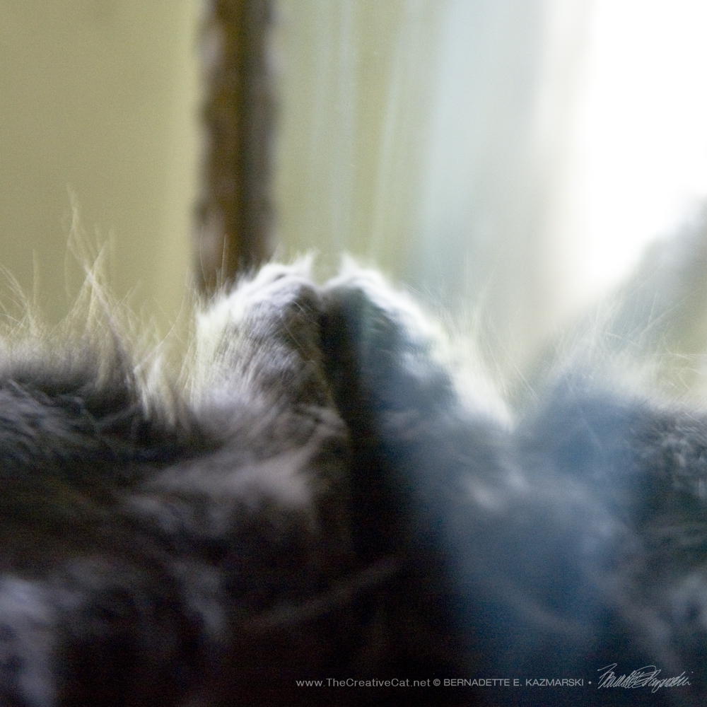 It's Tuesday Toesday and this means that Ophelia is lying on her back with her toes on the mirror.