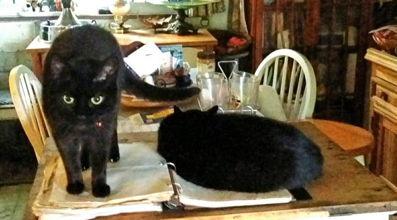 """""""Did you hide the recipe for the catnip brownies?"""" Apparently Bella fell asleep looking through the cookbook."""