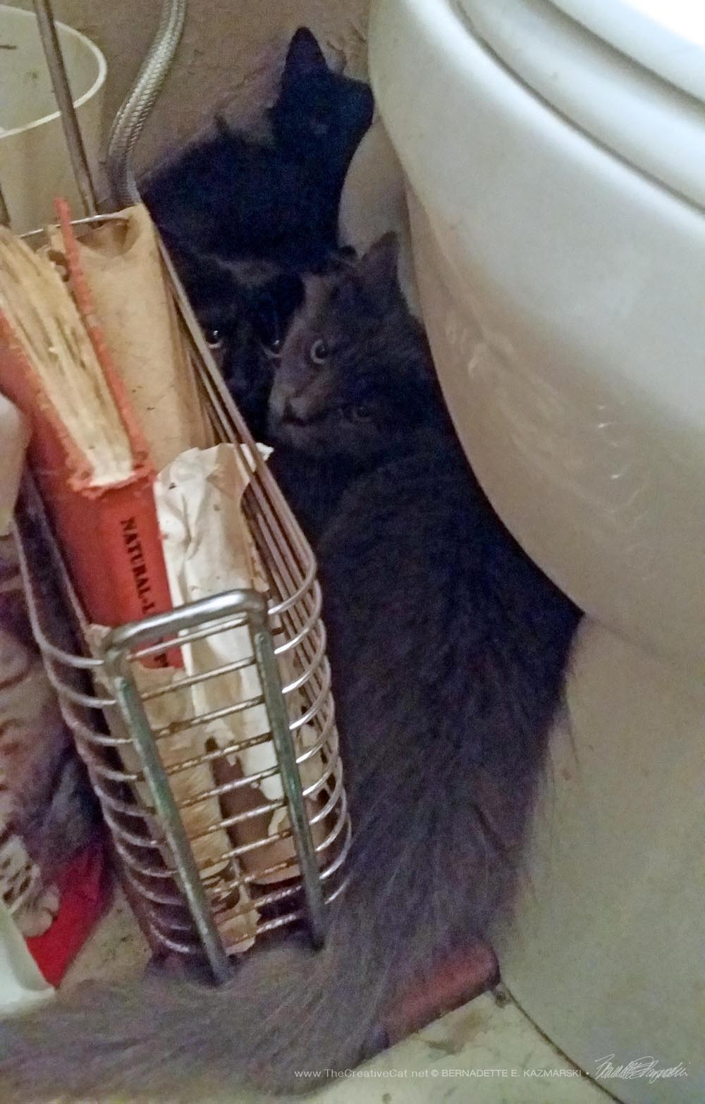 What would frightened kittens do if not for toilets?