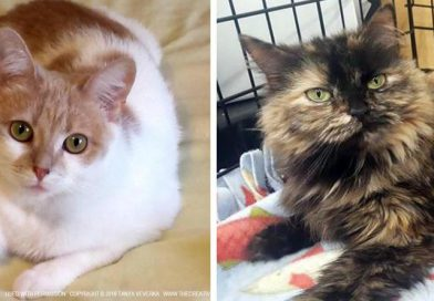 Cats for Adoption: Look Past Those Kittens to Two Lovely Adult Kitties