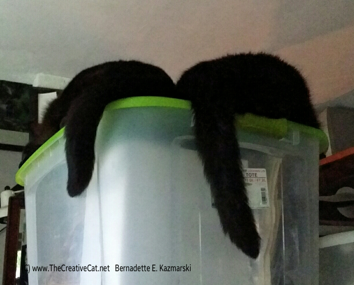 Cat butts.