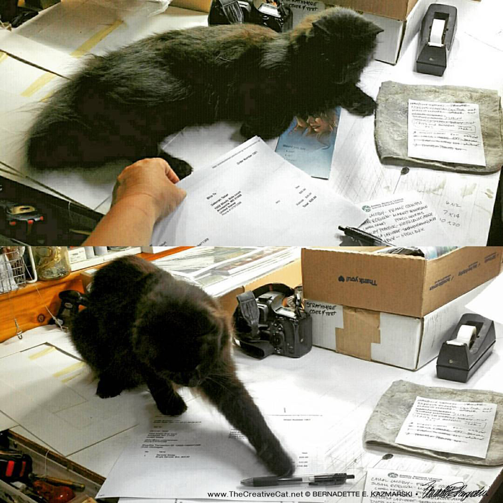 Hamlet is determined to be a studio cat, because pens are irresistible.