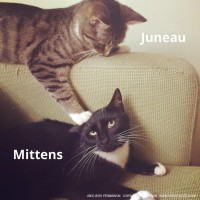Juneau and Mittens