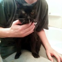 black cat with acupuncture needles