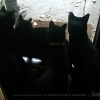 five black cats silhouette