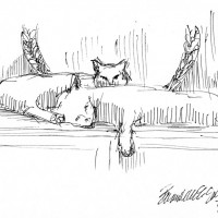 ink sketch of two cats napping