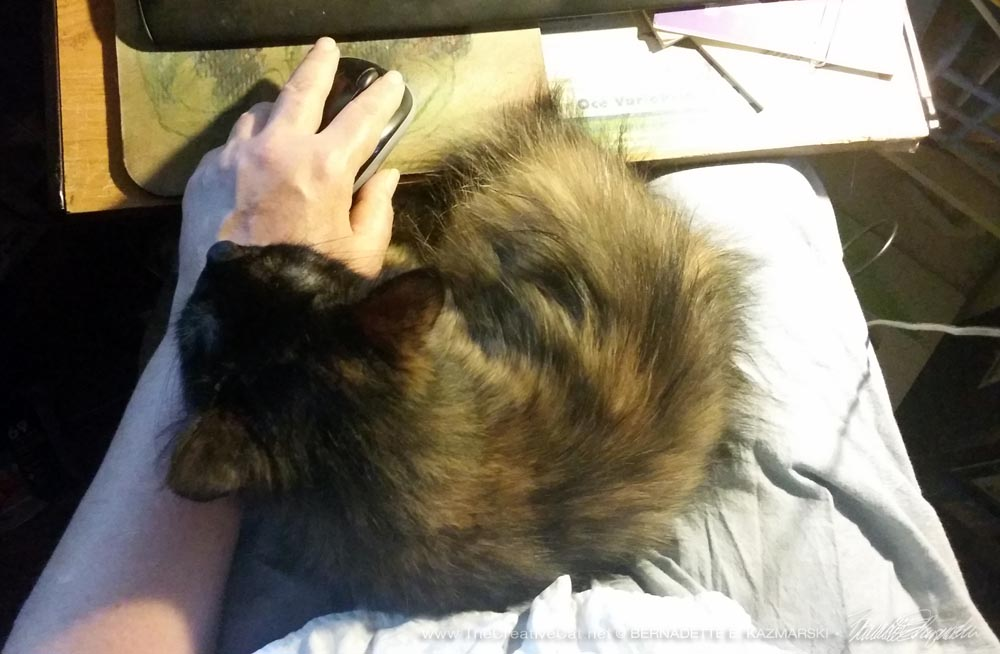 Charmee has discovered that laps are nice to curl up on.