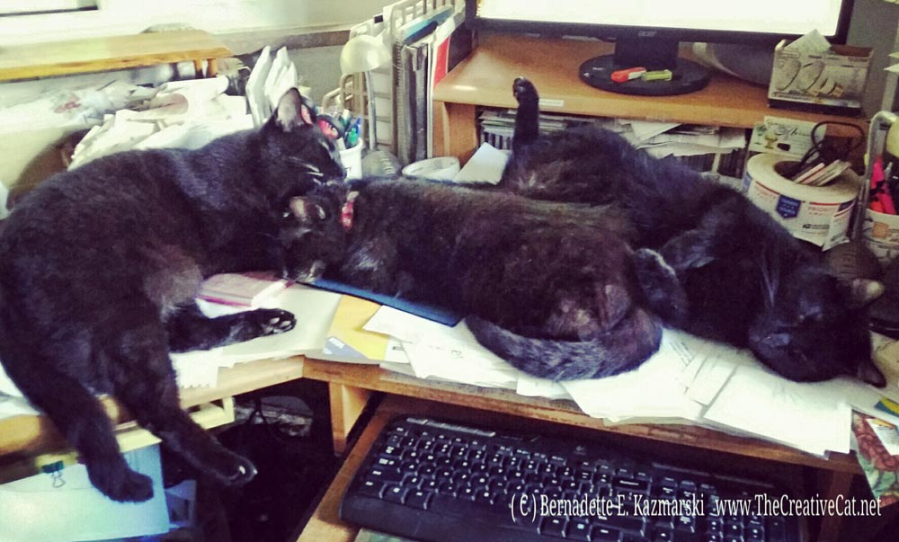 Just a little bit of comic relief here at the desk. Mr. Sunshine sleeps on his back when it gets warm, and he doesn't care who sees what. Jelly Bean is holding his mom still while he washes her face.
