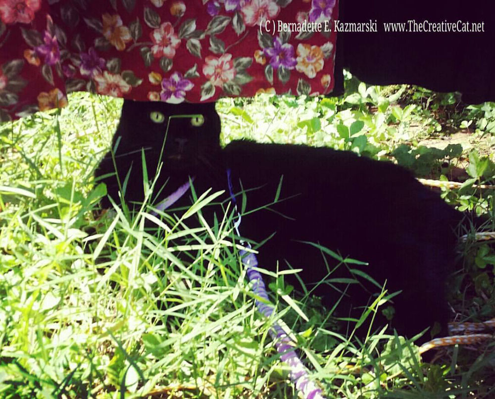 Mewsette finds a good spot in the shade of the laundry.