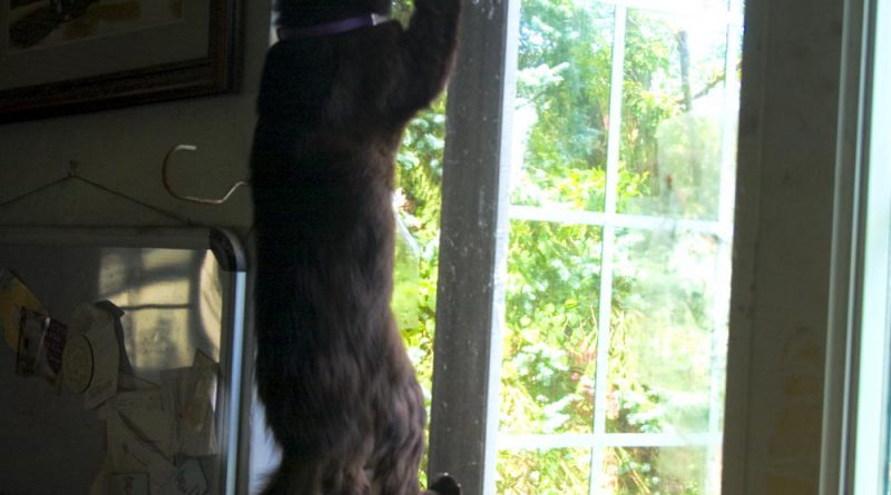 What's he supposed to do when the squirrel is right out there?