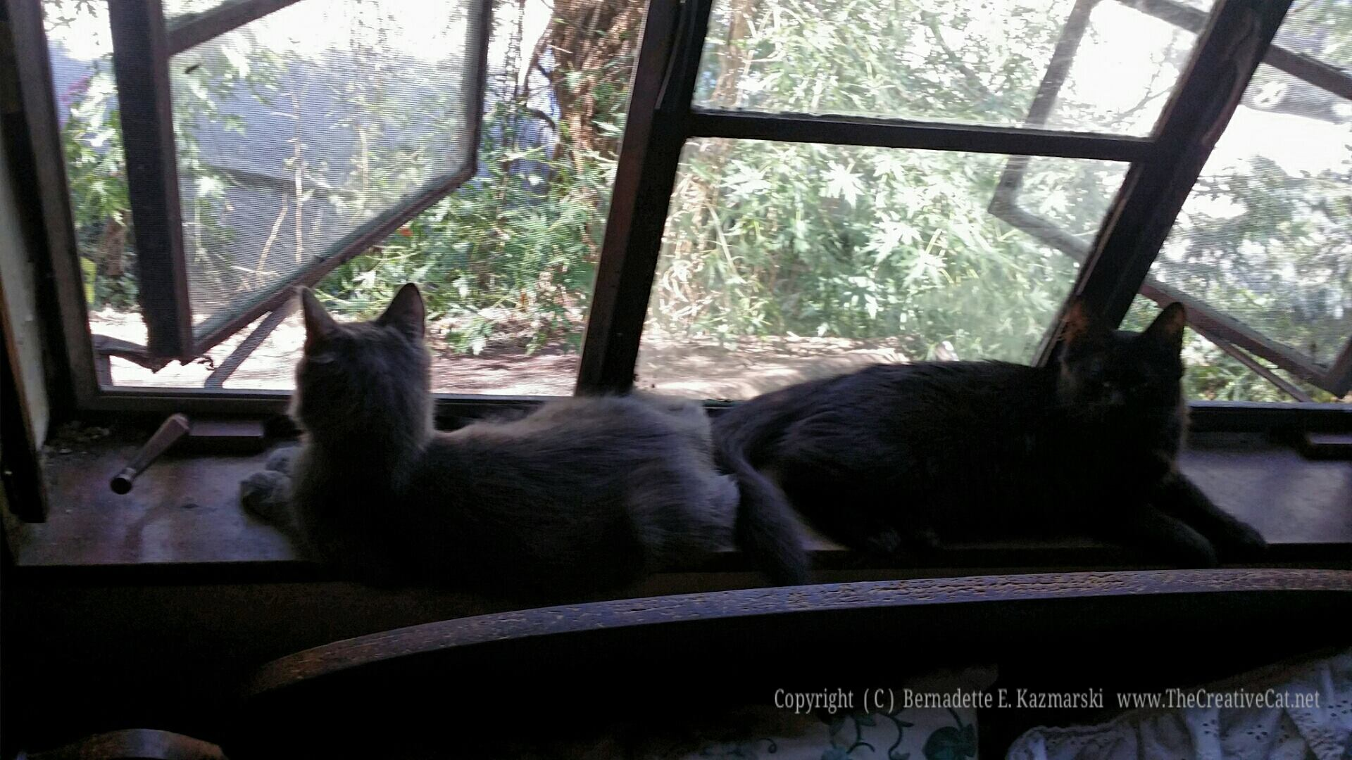Theodore and Simon butt to butt on the windowsill.