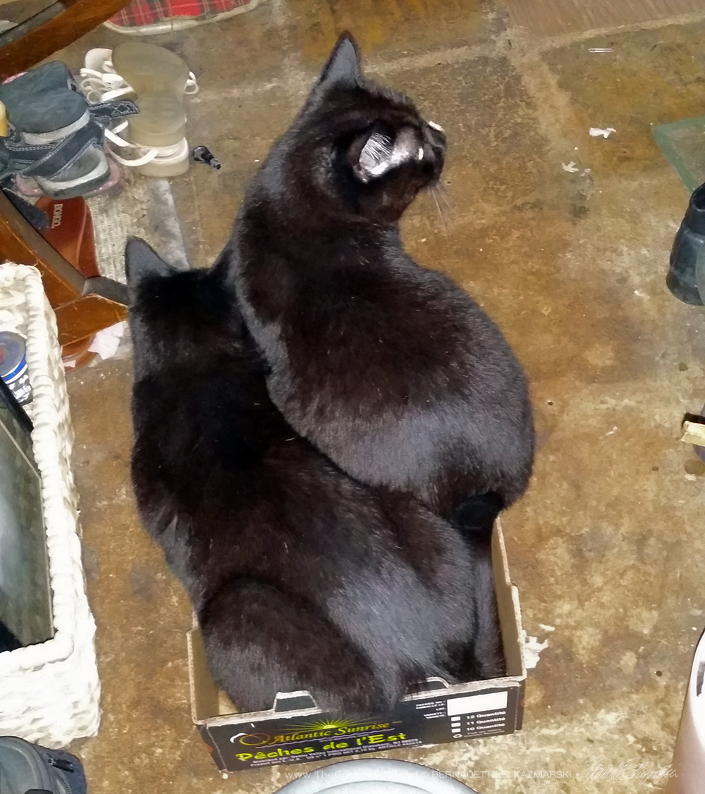 Boys in the box are invisible to kittens.
