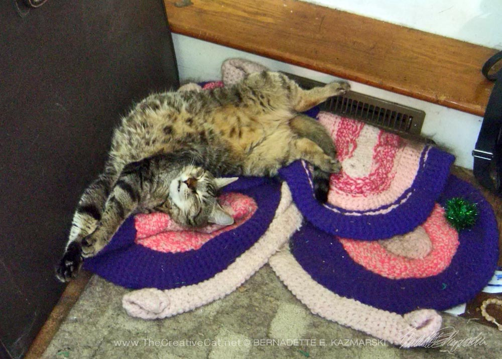 tabby cat sleeping in a twist