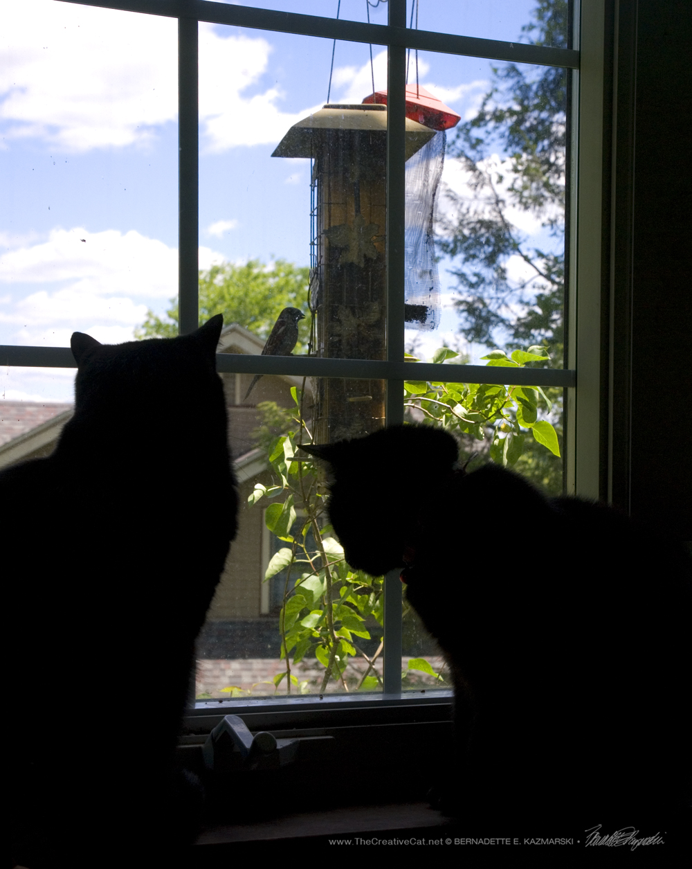 Bella and Mimi enjoy some Cat TV.