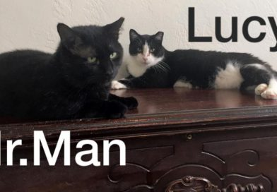 Cats for Adoption: Mr. Man and Lucy, BFFs, FIV+, and Sponsored!