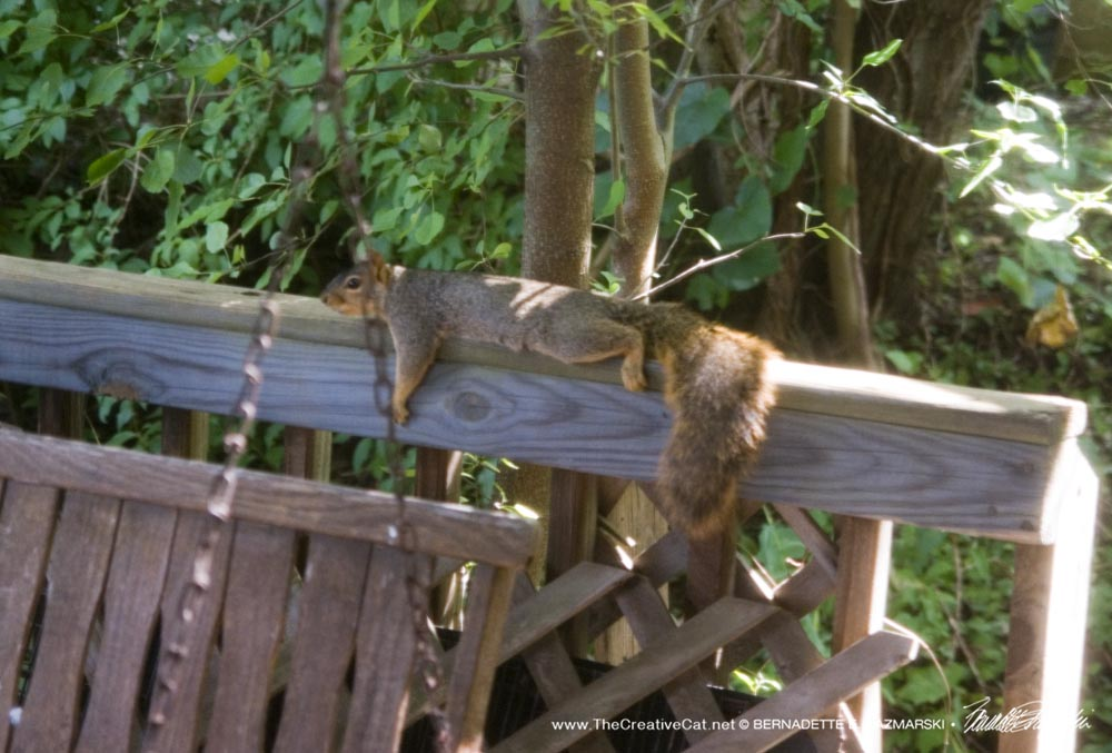 Squirrely rests on the deck rail.