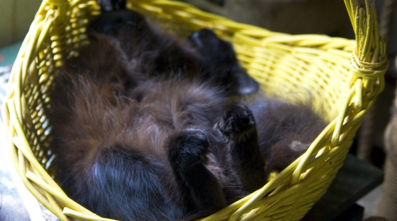 Hamlet in his basket.
