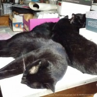 Giuseppe, Mewsette and Bean completely fill the space.