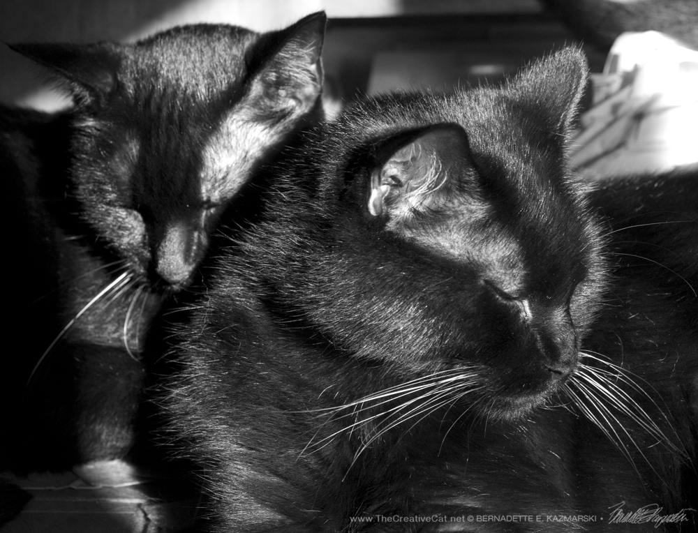 Giuseppe and Mewsette in a nice composition.