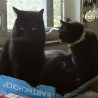 black cats in box