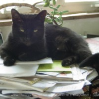 black cat on papers