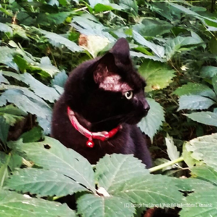 Mimi in the undergrowth in the woodland garden/