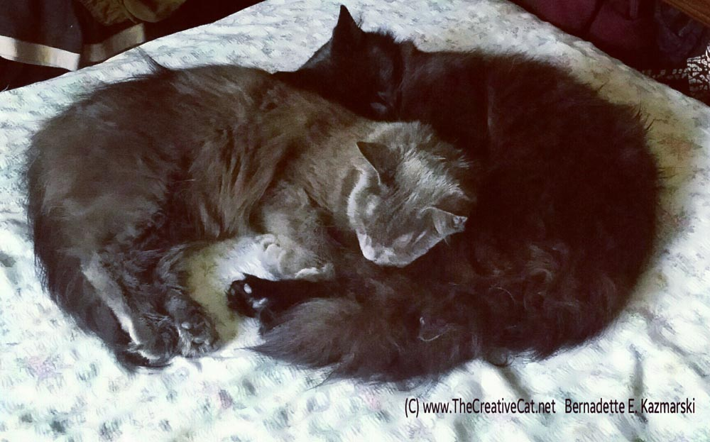 Curled up together on the bed.